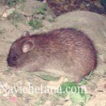 चूहा और भगवान हिन्दी प्रेरणादायक कहानी