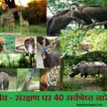 वन्य जीव संरक्षण पर 40 सर्वश्रेष्ठ नारे