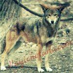 बचाओ-बचाओ भेड़िया आया हिन्दी प्रेरणादायक कहानी