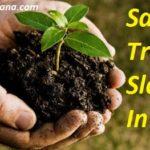 Top 25 Save Trees Slogans in Hindi पेड़ बचाओ स्लोगन