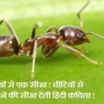 चीटियों से एक सीख ! चीटियों से सीखने की सीख देती हिंदी कविता ! Chittiyon se sikh