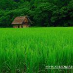 हरियाली पर प्रसिद्ध नारे Best Greenery Hariyali Slogans In Hindi
