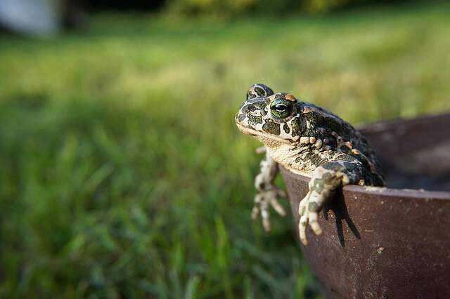 दो मेढ़क की कहानी, Two Frogs Moral Story In Hindi, maidhak, frog