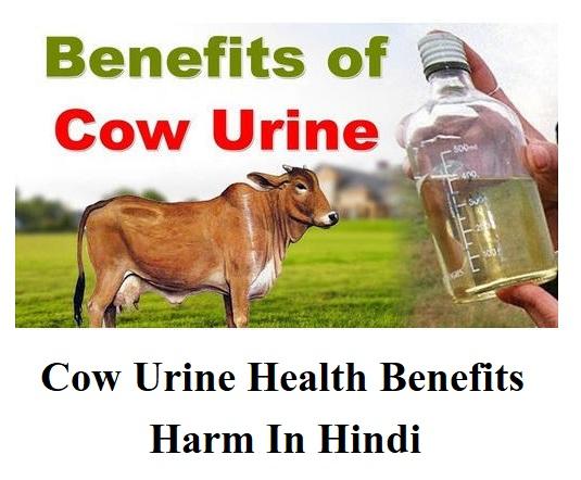 गौमूत्र से होने वाले 21 स्वास्थ्य-लाभ, Cow Urine Health Benefits Harm In Hindi,पतंजलि गोधन अर्क के फायदे, गोधन अर्क पीने के फायदे, पतंजलि गौ अर्क के फायदे, गाय के पेशाब से क्या होता है, गोमुत्राचे फायदे मराठी, पतंजलि गोधन अर्क सेवन विधि, गोधन अर्क पीने के नुकसान, पतंजलि गोमुत्र प्राइस,