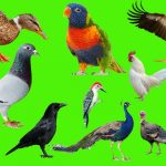 पशु-पक्षियों के 40 उपकार, 40 Benefaction Of Birds Animals In Hindi,Birds Animals benefit in hindi,pashu pakshi ke 40 upkar,nayichetana.com, Animals in hindi