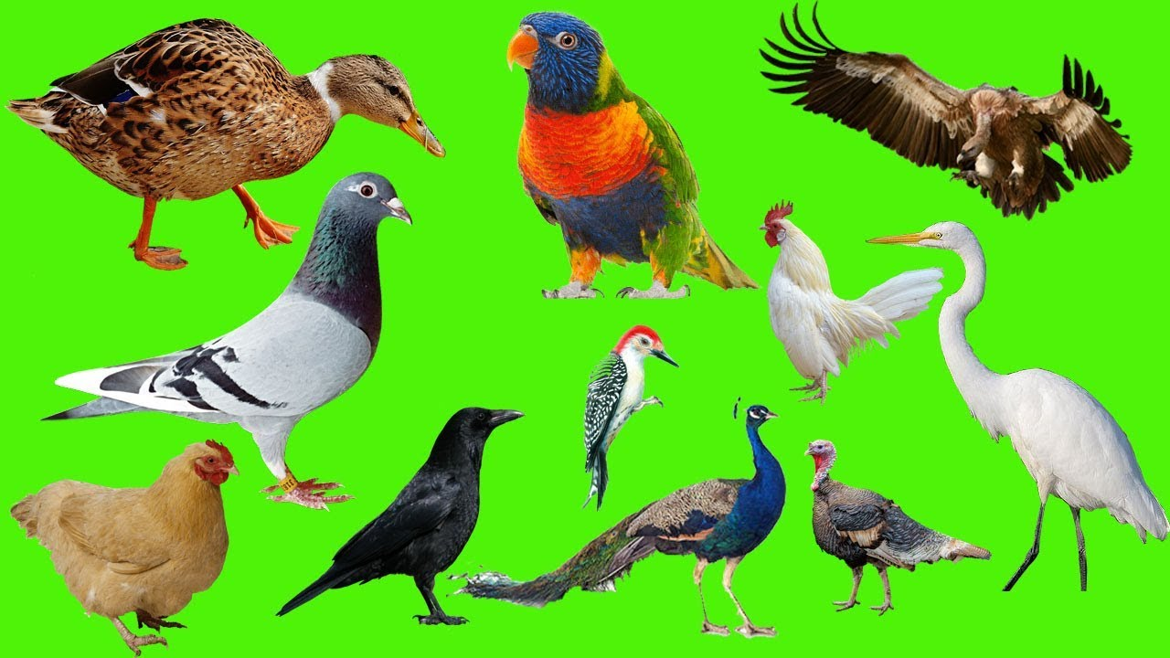 पशु-पक्षियों के 40 उपकार, 40 Benefaction Of Birds Animals In Hindi,Birds Animals benefit in hindi,pashu pakshi ke 40 upkar,nayichetana.com, Animals in hindi