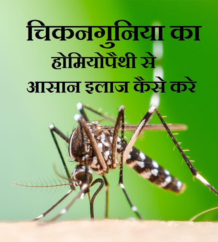 चिकनगुनिया का होमियोपैथी से आसान इलाज कैसे करे, Chikungunya Virus Symptoms Treatment Prevention In Hindi, Chikungunya ka ilaj,nayichetana.com