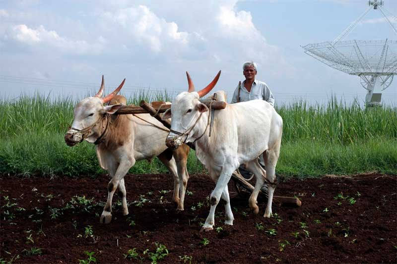 किसान के अहसान पर निबंध, Indian Farmer Essay in Hindi,kisan par nibandh,essay on farmer in hindi,kisan aandolan, kisaan ke ehsaan, farmer life