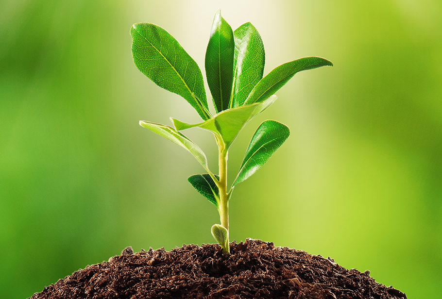plantation quotes in hindi,save tree quotes in hindi,Tree plantation quotes in hindi,पेड़ पौधों पर सुविचार,plant quotes in hindi, ped bachao