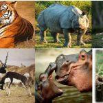 ज़हरीले डंक व जन्तुदंश से बचाव के तरीके, Jahrile Dank Ke Nuksan Aur Bachav Ke Tarike,Insect Bites,remedies for bee string,jahar se kaise bache,जन्तु जगतज़हरीले व अन्य जन्तुदंश से बचाव के तरीके