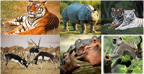 जन्तु जगत के विचित्र आश्चर्य,Strange Wonders Of Animal World In Hindi,Jantu Jagat Ke aaschary,jeev jantu ke wonder,Animal World world in hindi