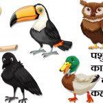 पशु पक्षी का बच्चा क्या कहलाता है,Pashu pakshiyon ke bacche ko kya kahate hain,Pashu pakshiyon ke baccho ke name, birds animals child name